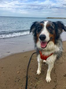 Dog friendly wineries, restaurants, beach