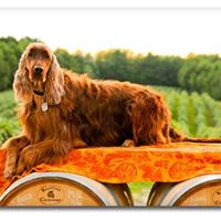Dog friendly Lake Erie Wine Country